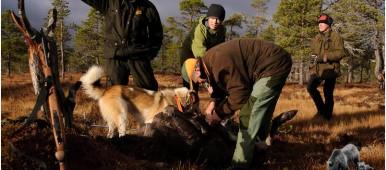Sesongens første elg i Sandøldalen ble felt av Ole Andre Bragstad etter et godt forarbeid av Molinja