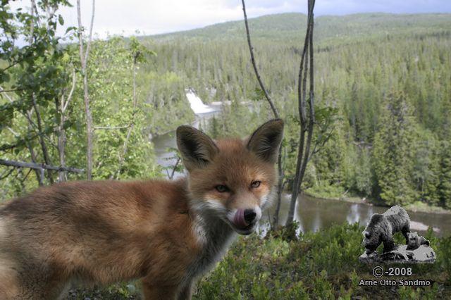 Bilde tatt med viltkamera nr.5
