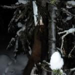 Hunnmår (1,43kg) fanget i Aasbøfelle
