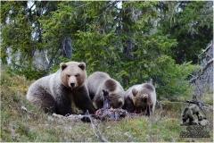 Bjørner våren 2010