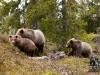 Skeptiske bjørner