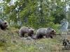 Bjørner på rekke og rad