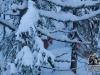Revelos i dyp snø