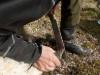 Klauvskjæring med kniv