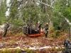 Oksen falt på en gunstig plass for elgtracen!